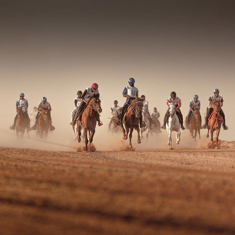 Horse Marathon IIphoto preview