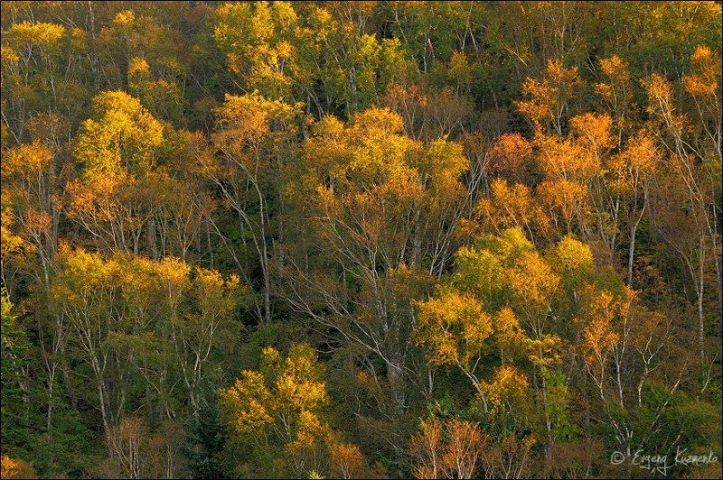 Осень на Холмском перевалеphoto preview