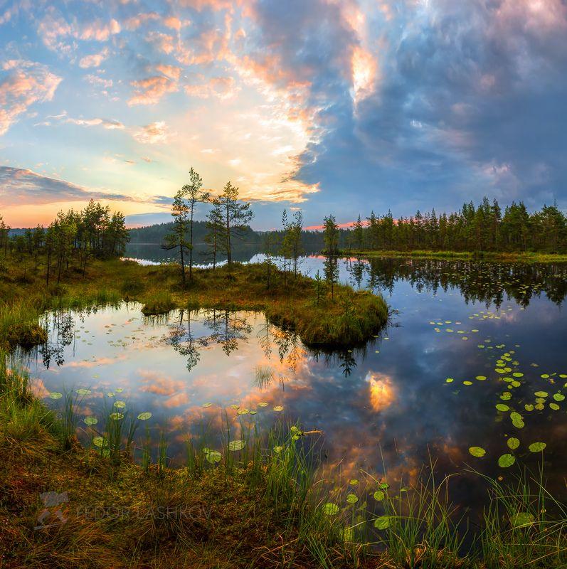 ленинградская область, рассвет, лето, сосны, озеро, отражение, деревья, берег, небо, облака, болото, Картинное утроphoto preview
