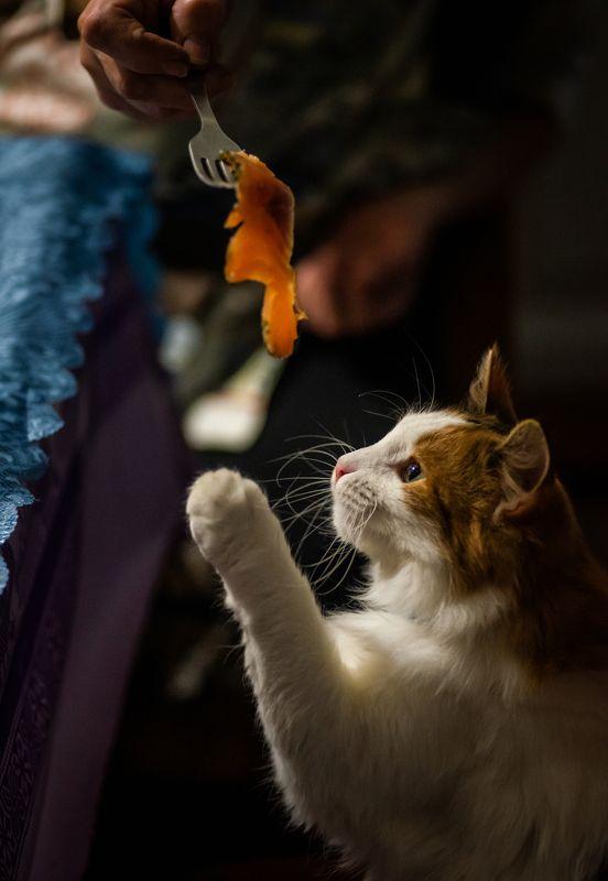 кошка, животные, быт, питомец, деревня, cat, animal, village Василиса.photo preview