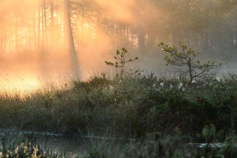 ленинградская область,рассвет,осень,утро,болото \