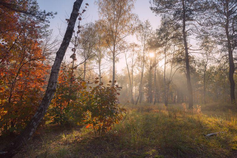 осень октябрь утро рассвет Октябрьский рассветphoto preview