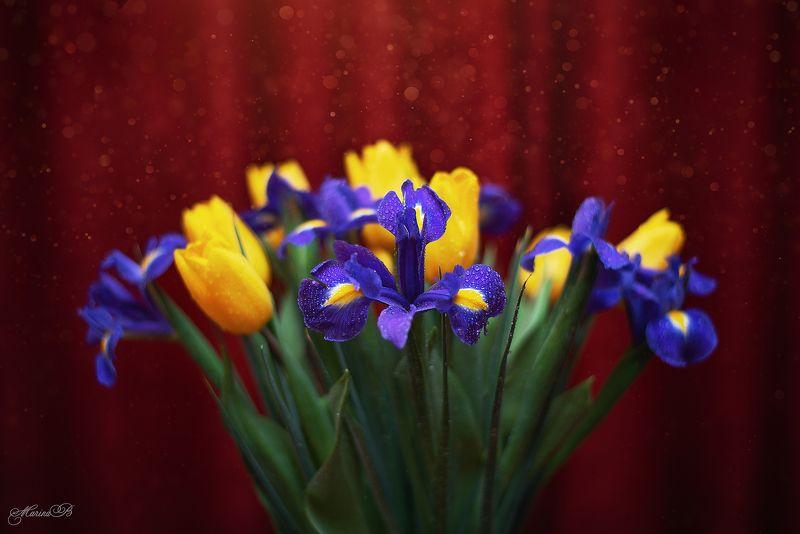 ирис, тюльпан, капли ,весна The Shiningphoto preview