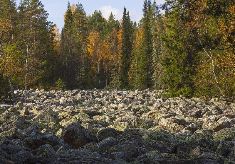 курум, курумник, каменная река, пейзаж, осенний пейзаж, южный урал, камни, лес, лес на камнях Курумник. ( Каменная река)photo preview