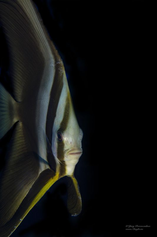 подводное фото подводный мир дайвинг другphoto preview