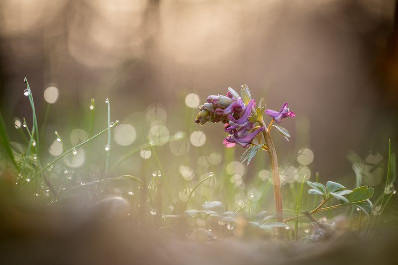 В весенних бокешкахphoto preview