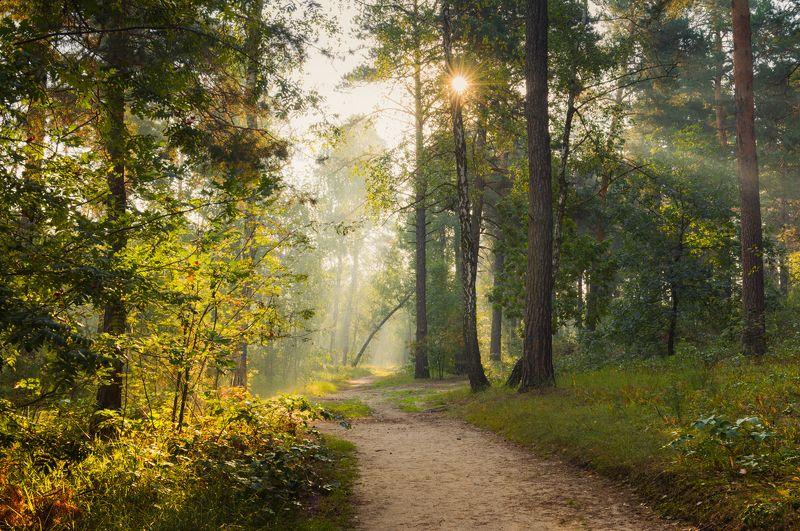 осень, сентябрь, утро, рассвет В объятьях солнечного светаphoto preview