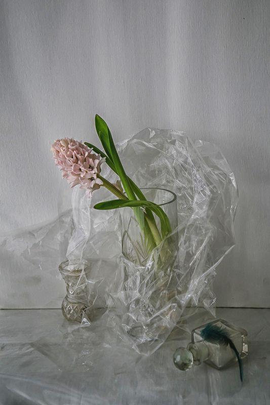 натюрморт, стекло, цветы, гиацинты Хрустящий лёдphoto preview