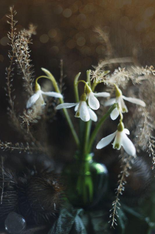 подснежники, весна ...Весна...photo preview