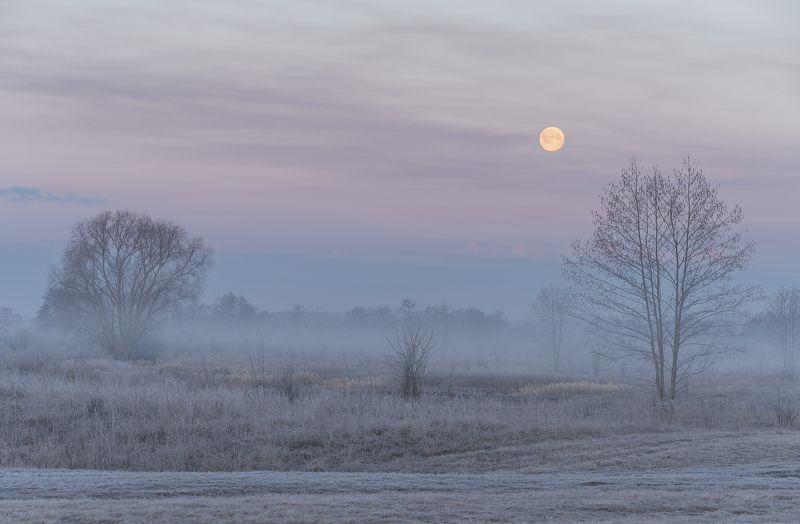 Мартовским утромphoto preview