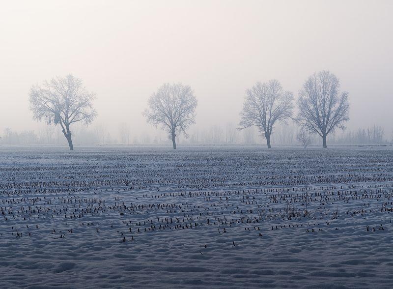 туман, деревья, черно белое, tree, fog, black and white, italy, италия В туманеphoto preview