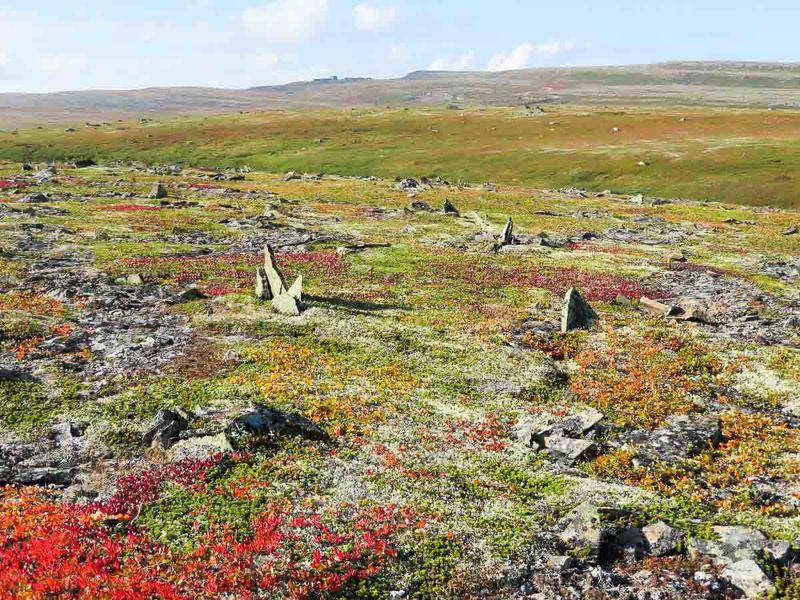 баренцево море, остров, тундра, камни, кильдин Тундра острова Кильдин.photo preview