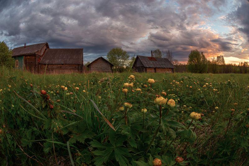 весна, купавки, купальница, деревня, облака про веснуphoto preview