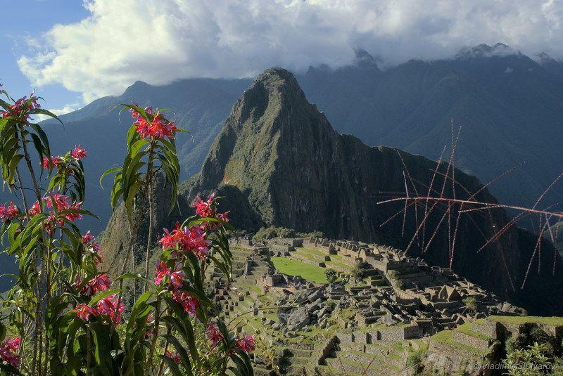 Мачу-Пикчу, Перу, путешествие, приключение, цветы, горы, Анды, Америка, шагнивнеизведанное Мачу-Пикчу, из серииphoto preview
