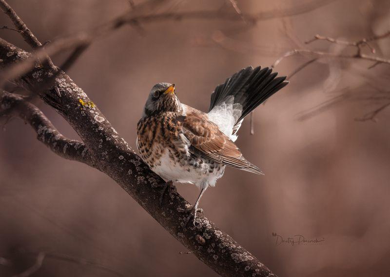 природа, лес, поля, огороды, животные, птицы, макро Царьphoto preview