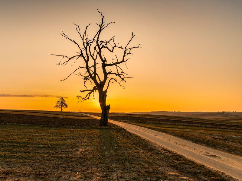 nature, landscape, colors, sunrise, tree Sułoszowaphoto preview