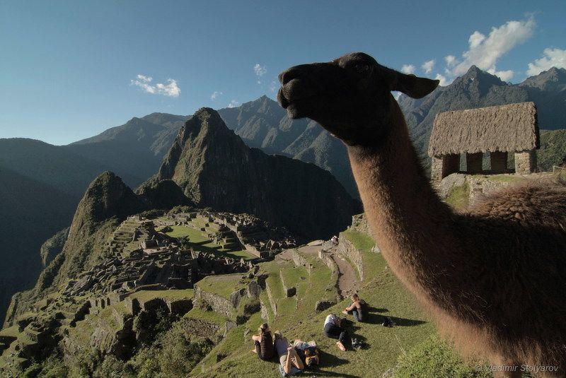 Мачу-Пикчу, Перу, путешествие, приключение, туризм, горы, лама, Анды, Америка, шагнивнеизведанное Мачу-Пикчу, из серииphoto preview