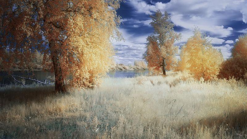 лето, солнце, берёзы, озеро Солнечный денёк.photo preview