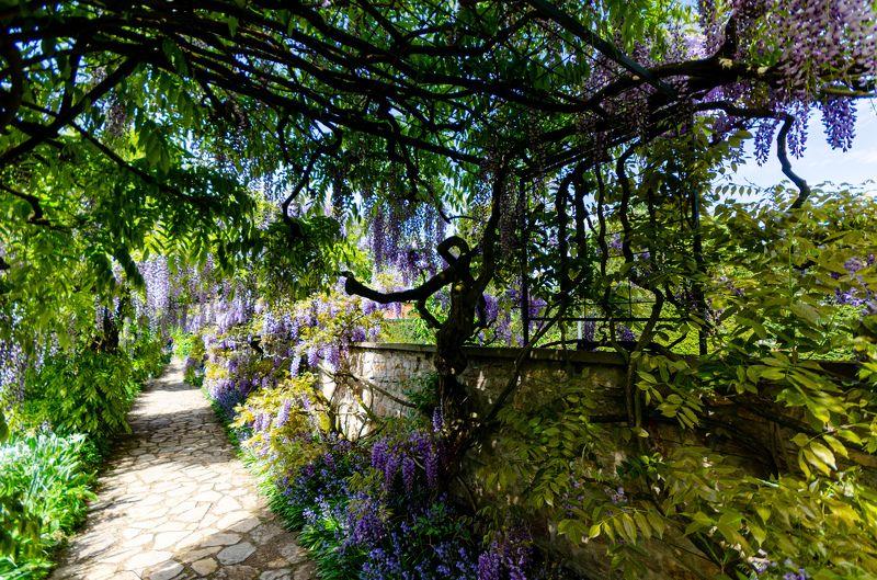 Germany; Schau- und Sichtungsgarten Hermannshof; botanic garden; flower; landscape; leaves; light; nature; plantflower; shadows; trees;  Schau- und Sichtungsgarten Hermannshofphoto preview