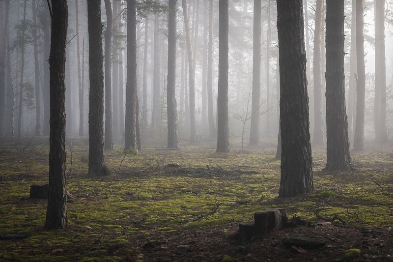 Morning forestphoto preview