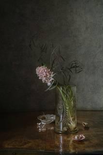 Одинокий гиацинт