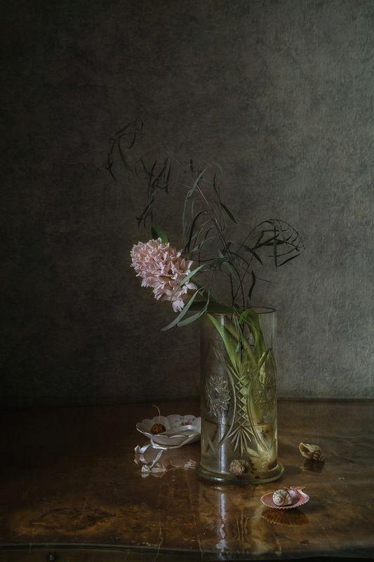 натюрморт, стекло, цветы, гиацинты Одинокий гиацинтphoto preview
