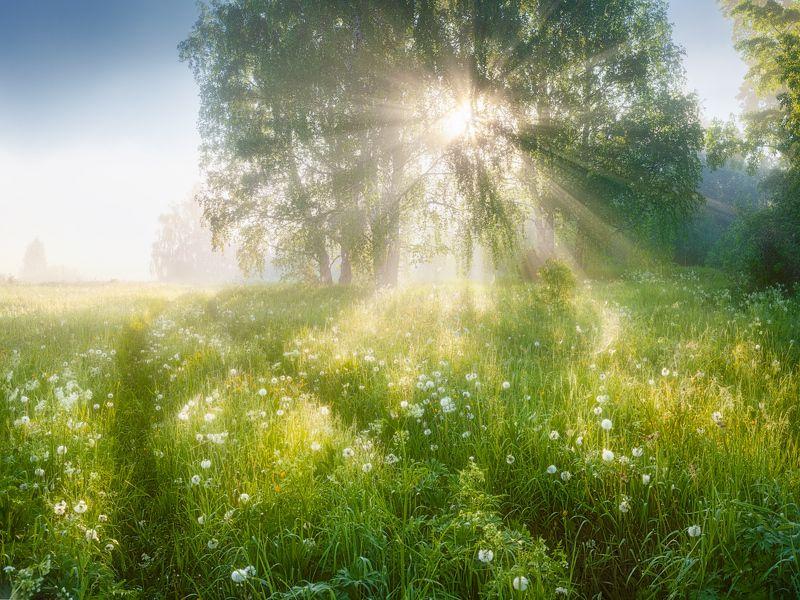 туман, лето, свет, солнце По колено в утренней росеphoto preview