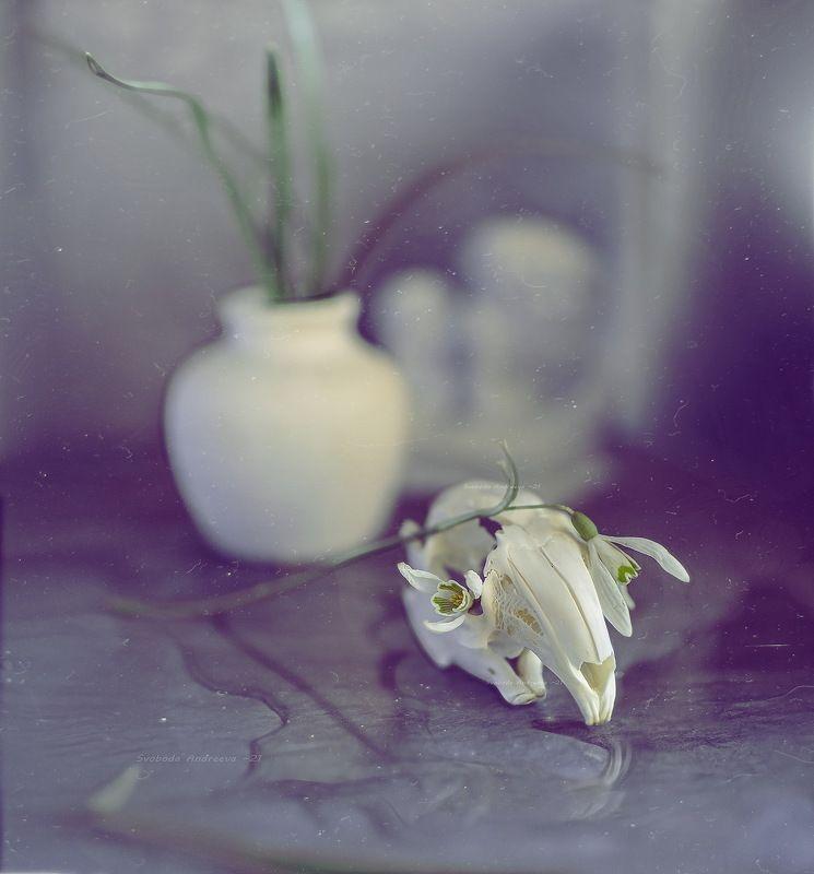 подснежник, череп, кролика, цветы, ваза, весна, белое, голубое, апрель подснежники*photo preview
