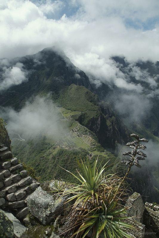 Мачу-Пикчу, Перу, путешествие, приключение, цветы, горы, облака, Анды, Америка, шагнивнеизведанное Мачу-Пикчу, из серииphoto preview