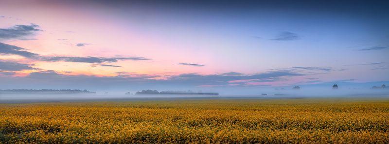 поле, рассвет, небо, панорама, Рапсовое поле на рассветеphoto preview