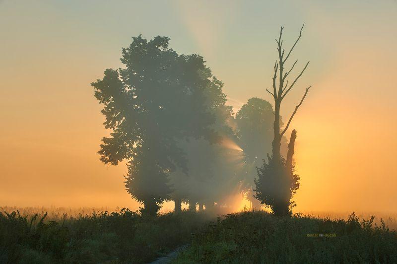 Misty morning, sunrise, landscape, fog, clouds, fields, Foggy morning. фото превью