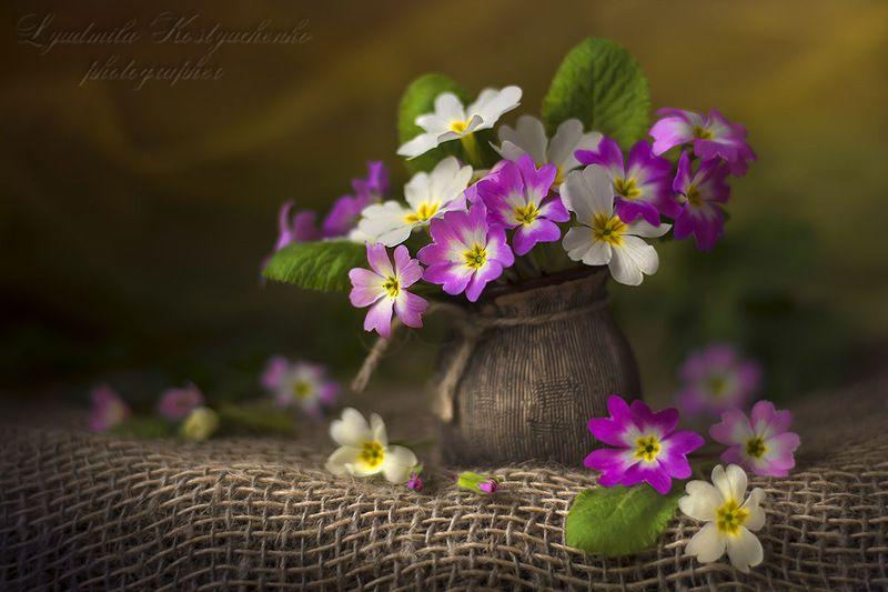 художественное фото,натюрморт,букет с цветами,примулы. Букетик примулphoto preview