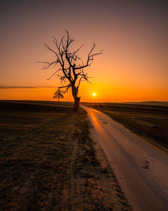 nature, landscape, colors, sunrise, tree Treephoto preview