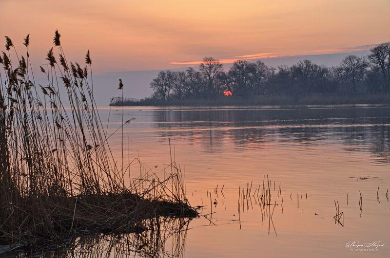 утро, восход, солнце, рассвет, апрель, туман Брезжит свет на заводи затона... фото превью