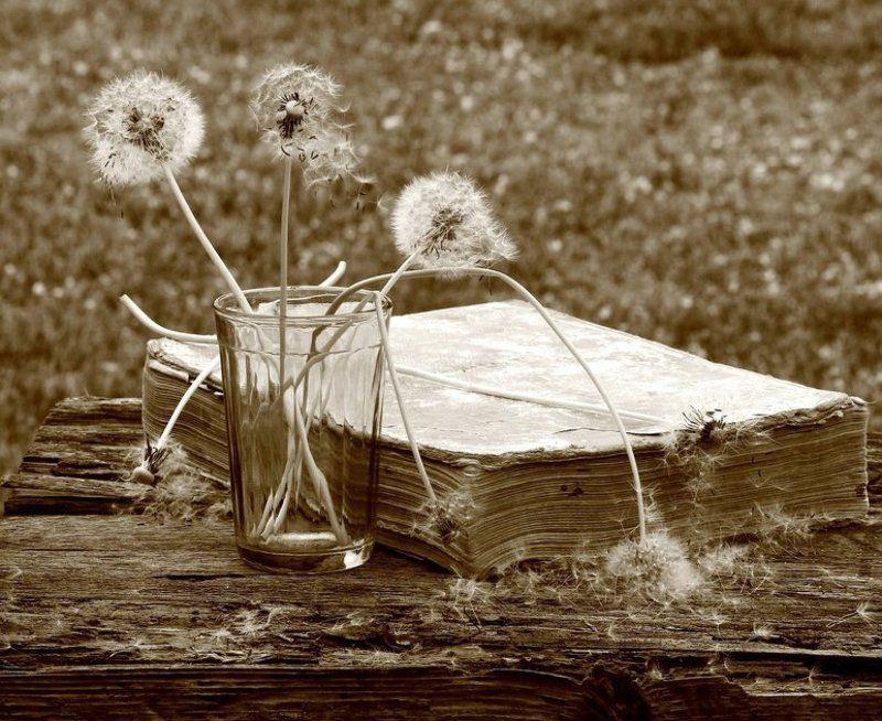 натюрморт, фотонатюрморт, монохром, сепия, книга, одуванчики,  наталья казанцева Со старой книгойphoto preview