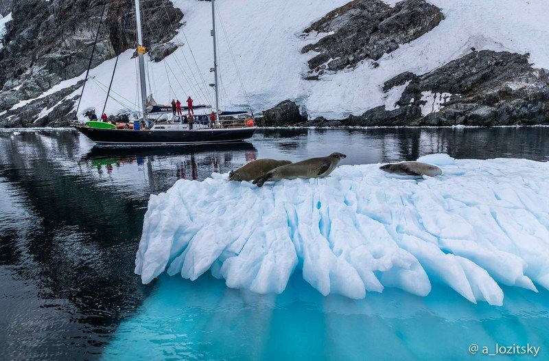 Antarcticaphoto preview