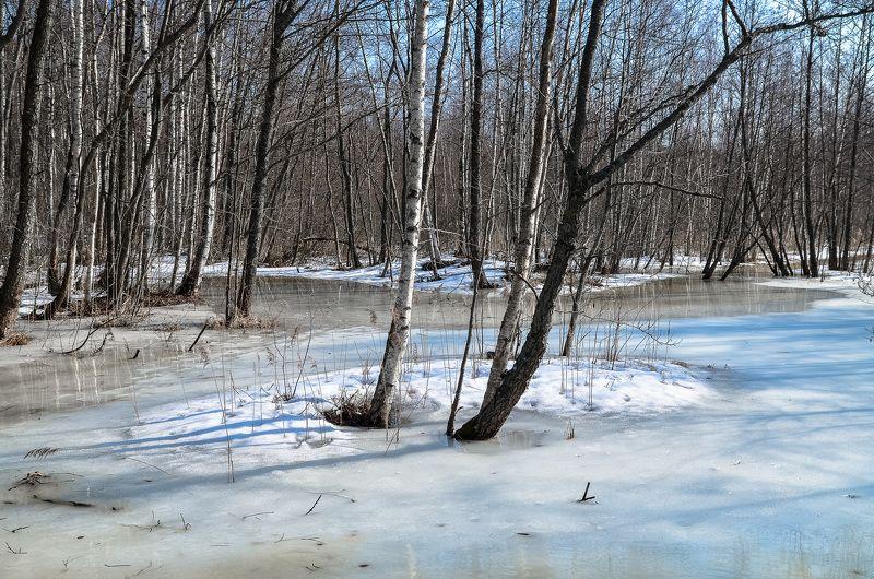 весна, болото, ленобласть, заповедник, заказник, красиво, снег, апрель, река Апрель.photo preview