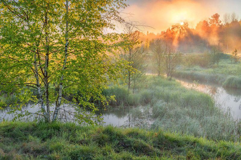 Утренняя свежесть...photo preview