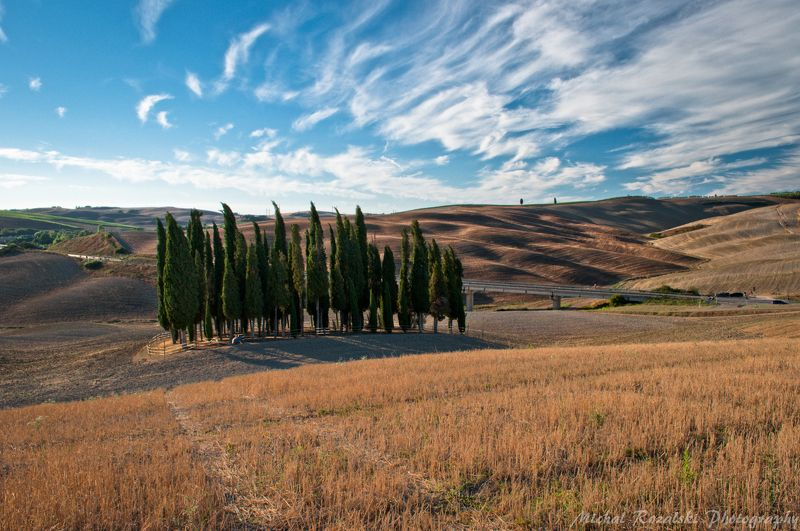 cypresses, ,hills, ,italy, ,tuscany, ,sky, ,clouds, ,harvest, ,summer, ,trees, ,landscapes Bunch of the most famous cypressesphoto preview