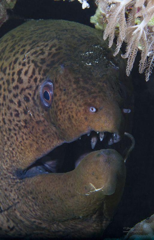 красное море, египет хургада дайвинг подводный мир жогло zhoglo Ку-КУphoto preview