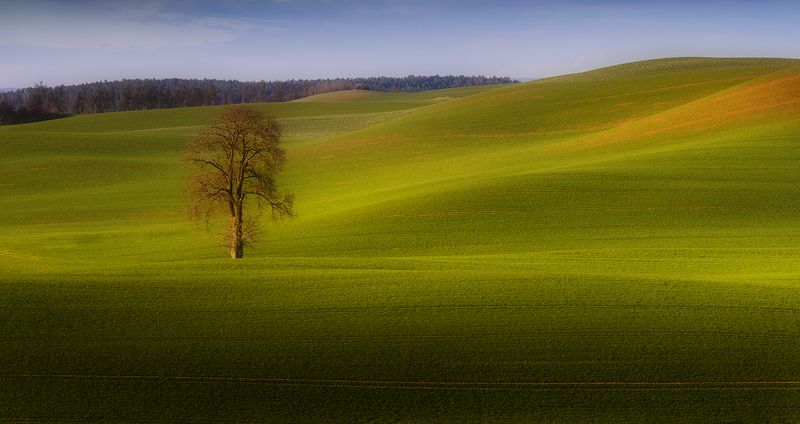 tree, filed, sky, spring, poland, lonley, green Big and Small tripsphoto preview