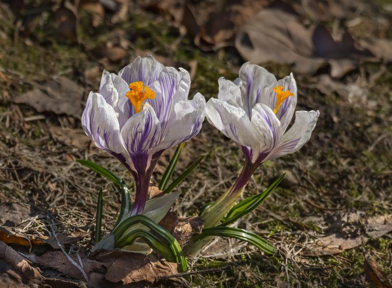 Апрельские макрушкиphoto preview