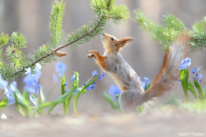 белка, весна, squirrel, подснежники ***photo preview