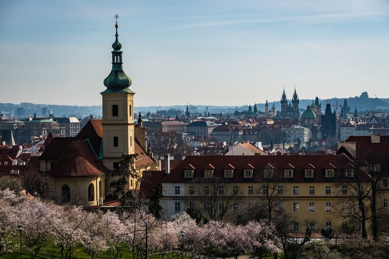 spring, prague, city, flowers, blosoom, garden, trees, branch, весна, прага, цветение, город, сад,  architecture, cityscape, church, sunny, Spring in Praguephoto preview