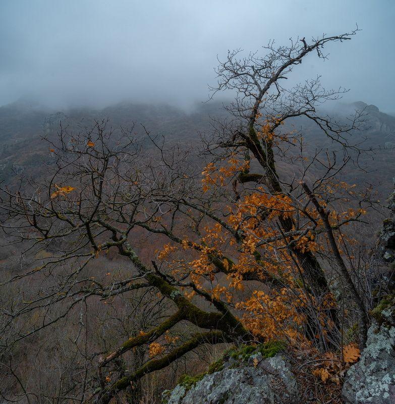 гора, рассвет, небо, плато, облака, утро, тучи, непогода, домбай ,дерево, туман, дымка ОСТАТКИ ОСЕНИphoto preview