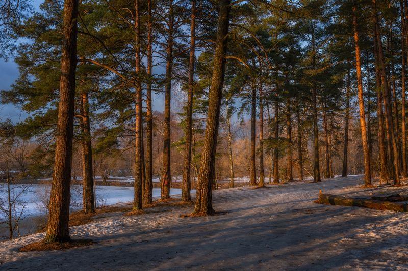 весна, апрель, природа, сосны, лес, Московская область, пейзаж Апрельский вечерphoto preview