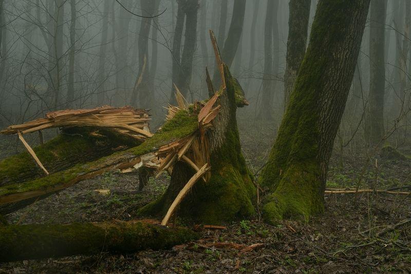 весна туман лес утро Падениеphoto preview