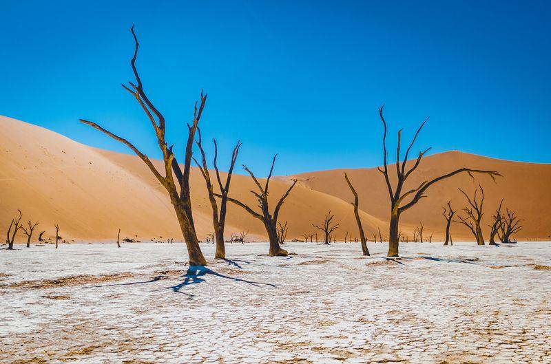 пустыня, пейзаж, landscape, орикс, антилопа орикс, намибия, пустыня намиб, африка, desert, desert namib, namibia, africa, wildlife, wildlife, photography Мёртвое болото.photo preview