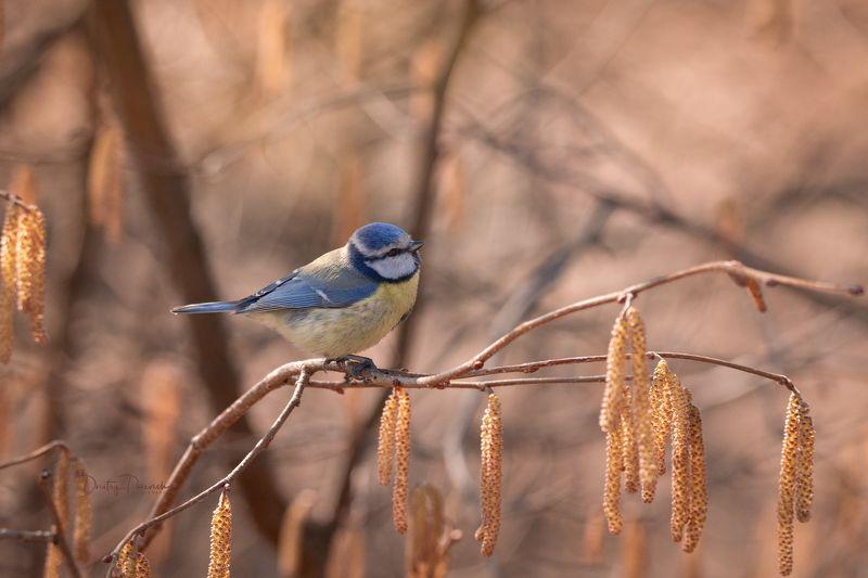 природа, лес, поля, огороды, животные, птицы, макро Весна пришлаphoto preview
