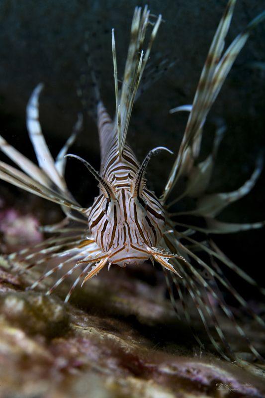 подводное фото подводный мир хургада египет жогло zhoglo красное море Индеецphoto preview